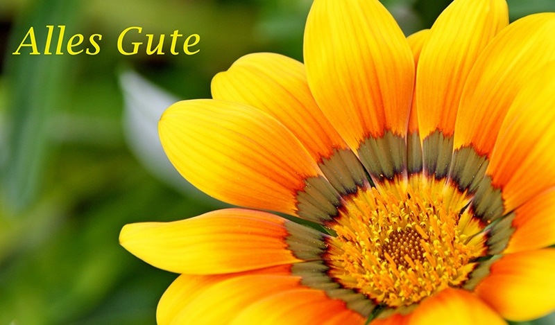 Alles gute, Sonnenblume